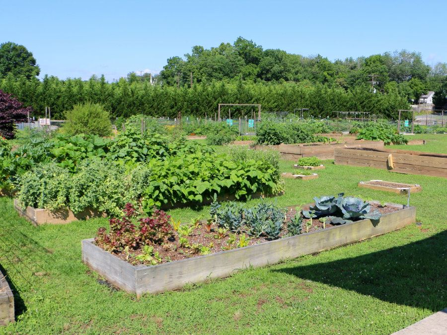 Garden beds at Unity Park & Community Gardens on College Avenue